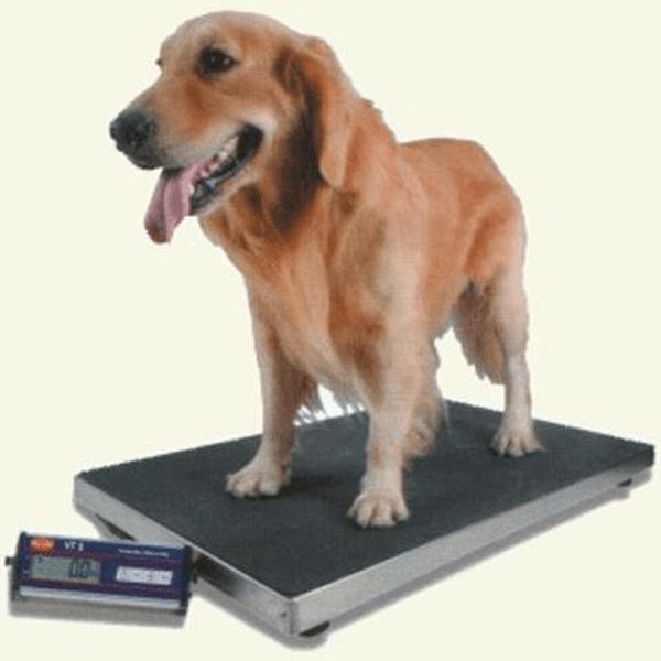 Cantar electronic veterinar VT1 | Medizone